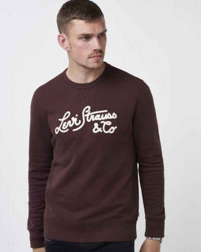Till killar från Levis, en brun sweatshirts.